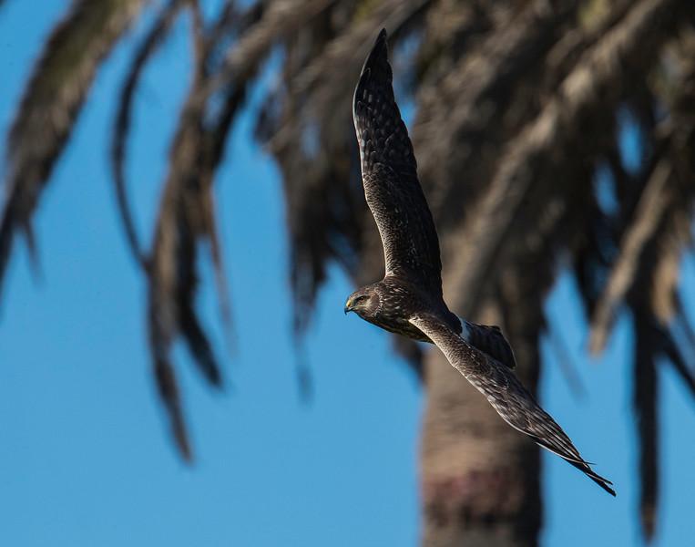HNBH Birds1.jpg