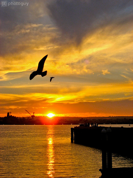 Bird Flies Over San Diego Bay At Sunset