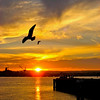 Bird Flies Over San Diego Bay At Sunset