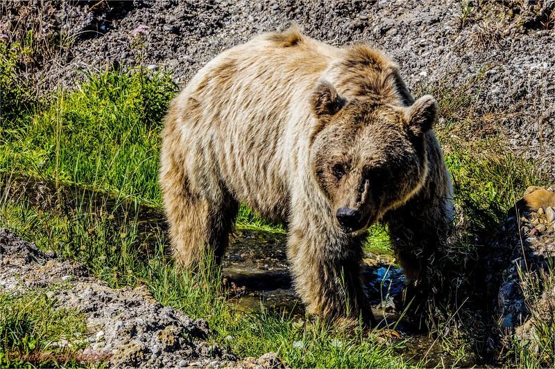 2016-09-07 Tierpark Goldau - 0U5A8828-Bearbeitet.jpg