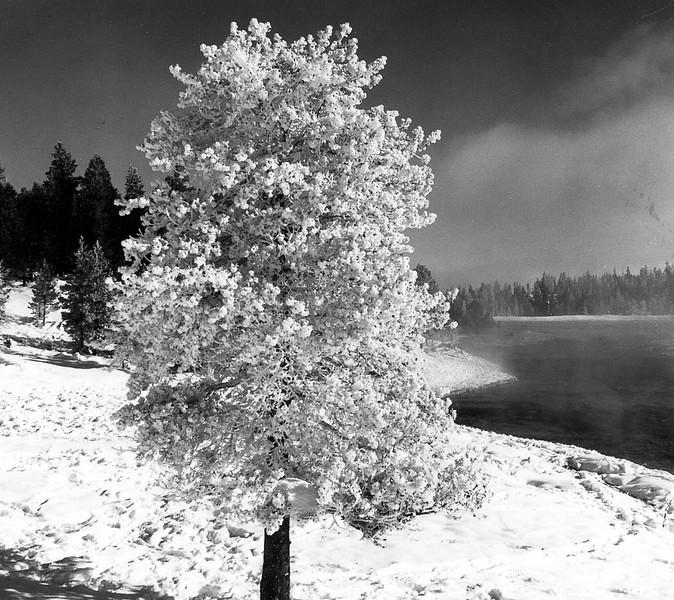 Yellowstone-008.jpg