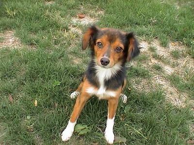 Riley, stray mutt (2002-2006)