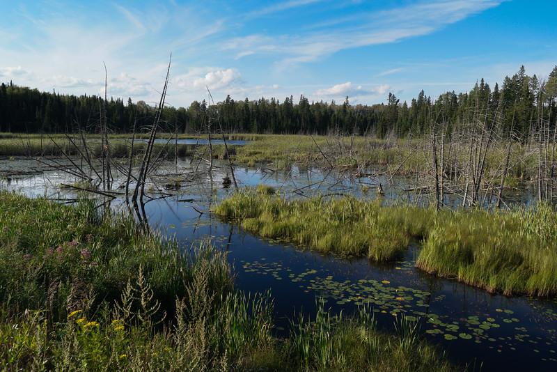 Lake of the Woods-20.jpg