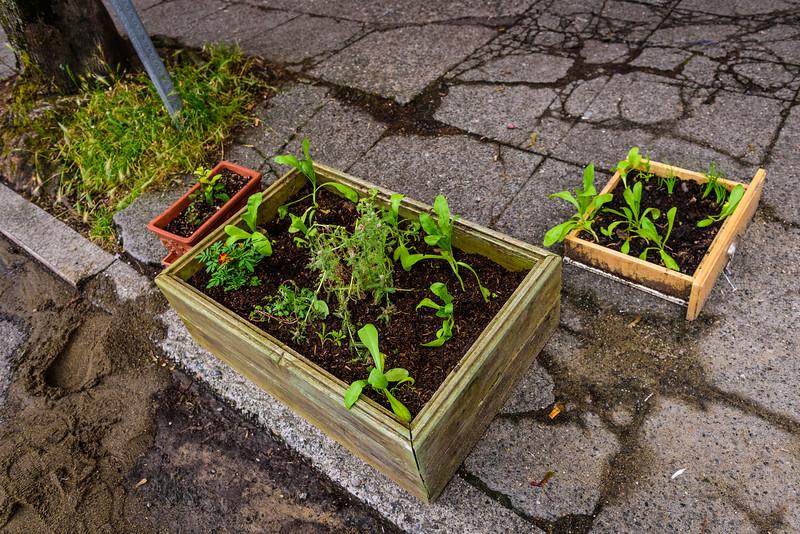 A Street Garden