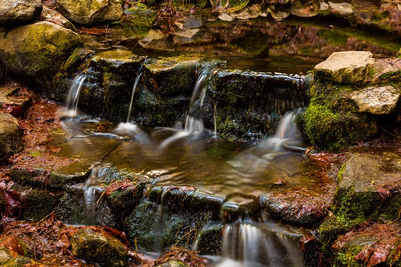 Fern Springs