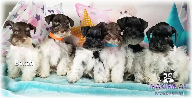 Maddie Pups 013.jpg