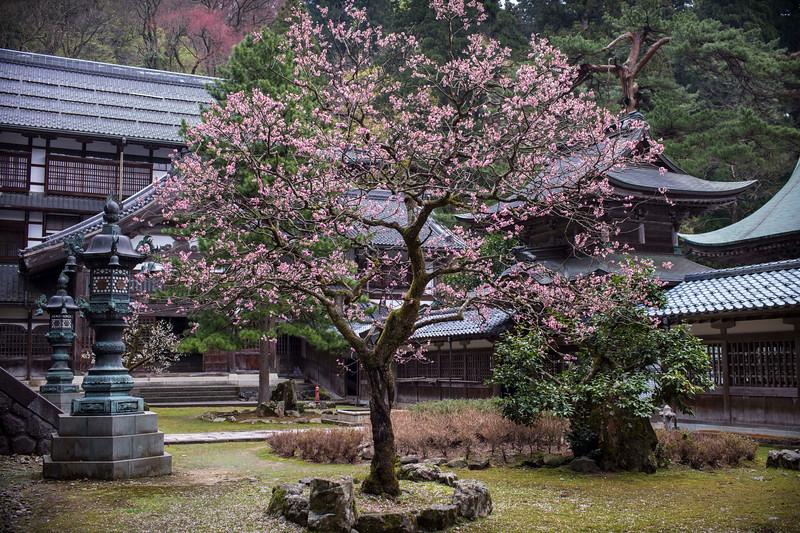 Eiheiji Temple 1004139 .jpg
