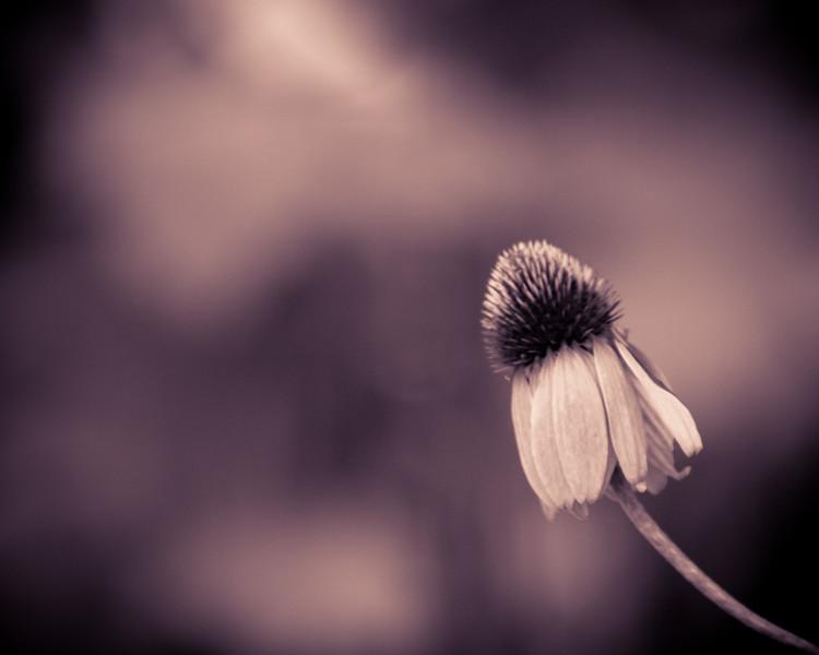 Flower split tone-9384.jpg