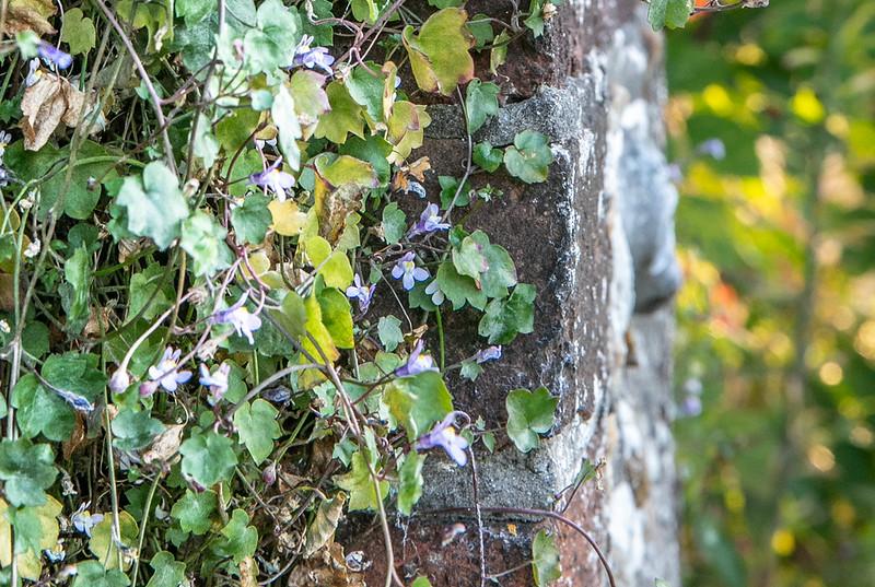 20190918- Newtown Road Cemetery Flora Sept 2019 - 133.jpg
