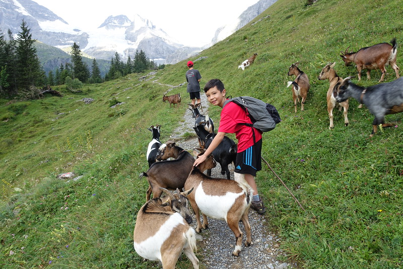 Marius with Goats.JPG