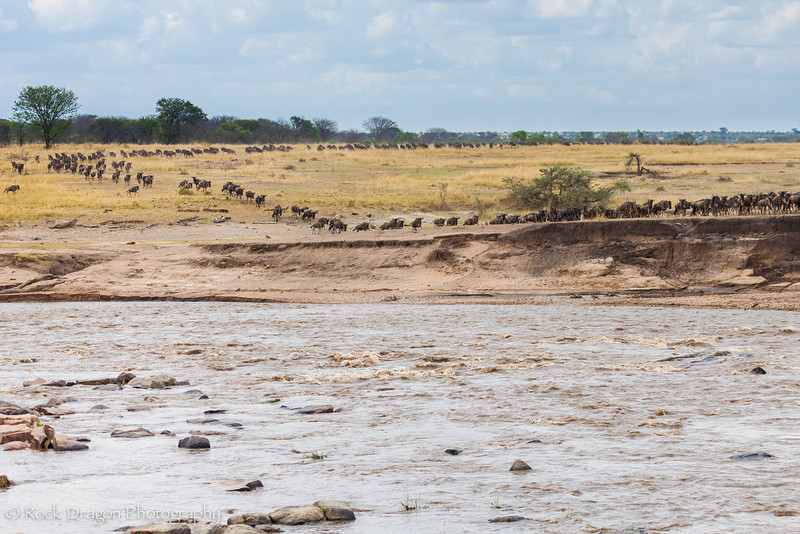 North_Serengeti-69.jpg