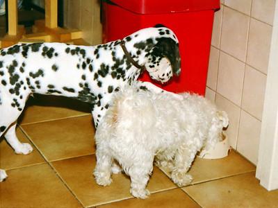 Puppy en jonge hond