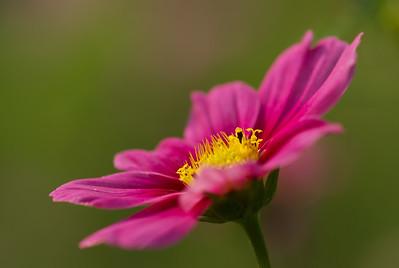 Purple;Yellow;Flowers