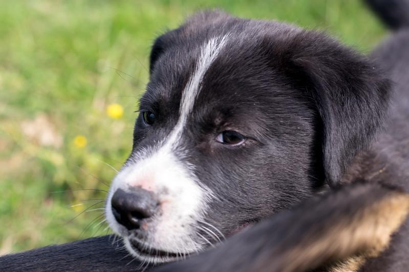 Honey's Puppy #2