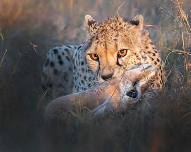 Kenya (2/19)