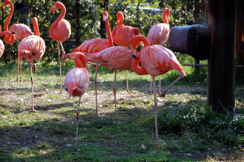 Flamingos at Ueno Zoo