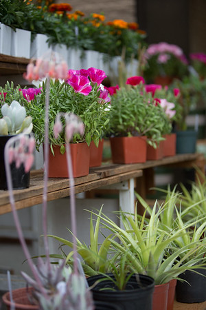 2017 05 Flower Show and Sale