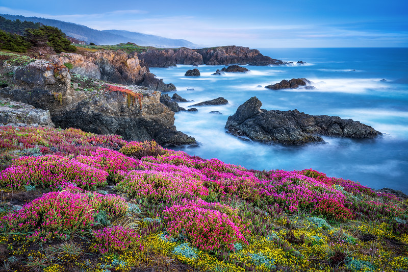 Bihler Point & Spring Bloom, Study 3. Sea Ranch, California