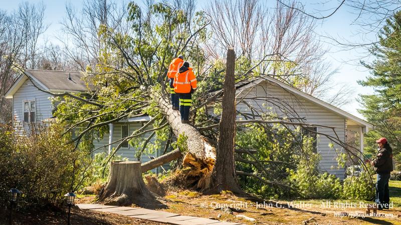 Neighborhood Tree Damage