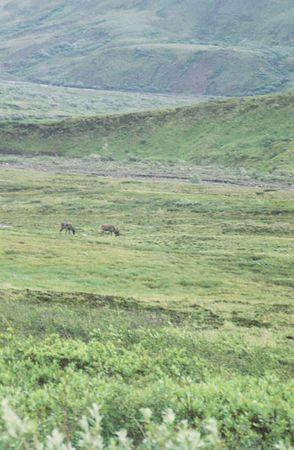2002 Alaska