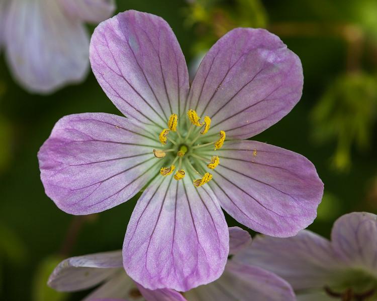 meadow-flower.jpg