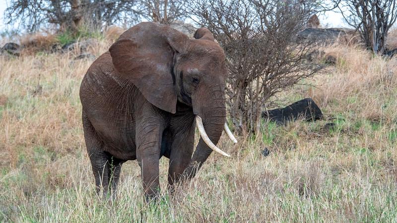 Tanzania-Tarangire-National-Park-Safari-Elephant-06.jpg