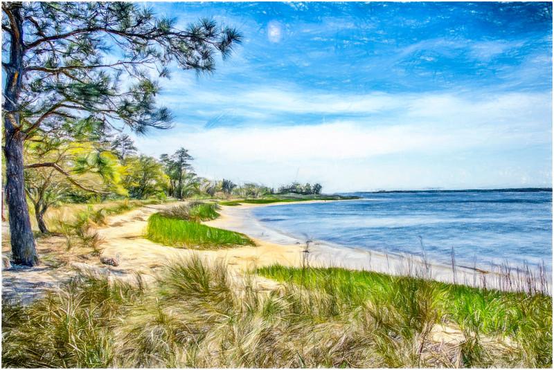 Carolina Beach State Park.jpg