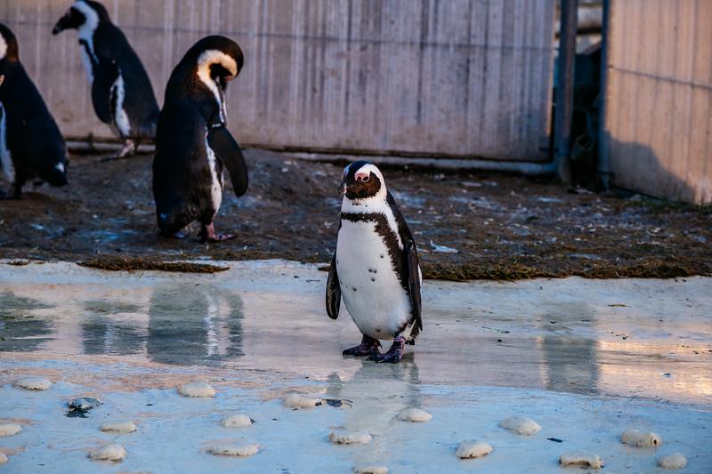 Tonis Zoo-0420.jpg