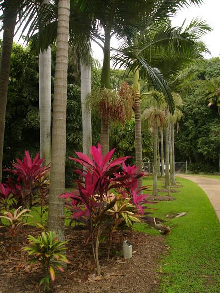 20070527_2844 Palmetum, Townsville.