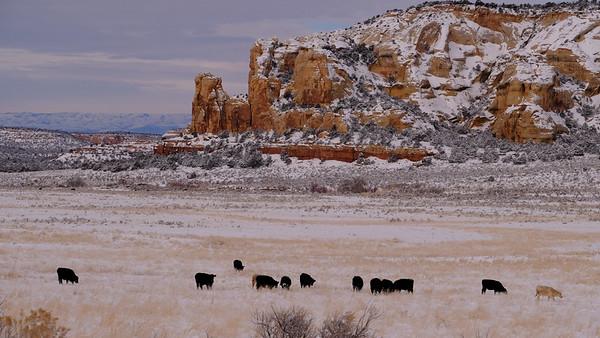 Ranch Life ~ Winter