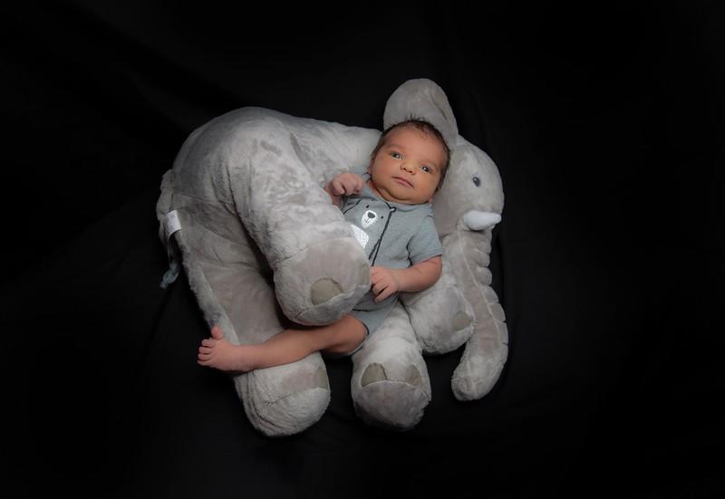 Elephant 1.jpg.jpeg