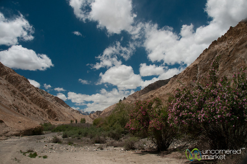 Trekking from Skyu to Markha - Markha Valley Trek Day 3, Ladakh, India