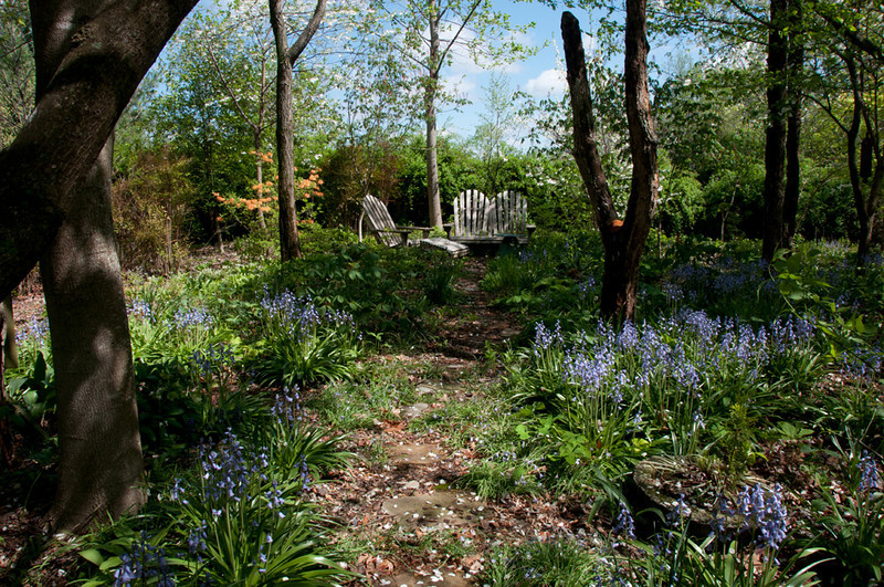 The Goat's Garden in it's zenith... Spanish Blue Bells, Helesias, and and tangerine Florida azalea in bloom...among many other native wild flowers