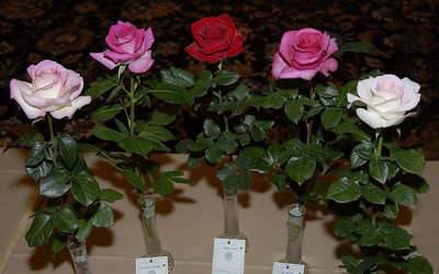 Rose Show exhibits and friends