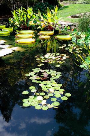 2011 Susan Duke's Garden