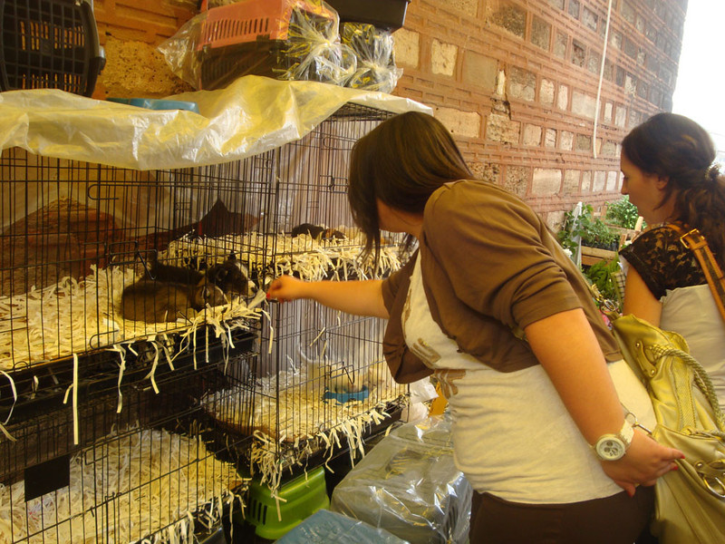 Animal market puppies.JPG