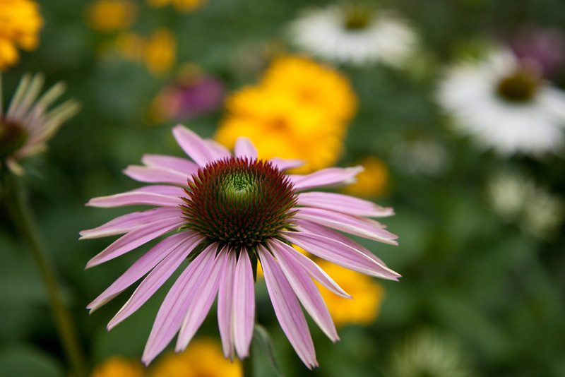 The Middlebury Inn had some lovely flowers in the garden.