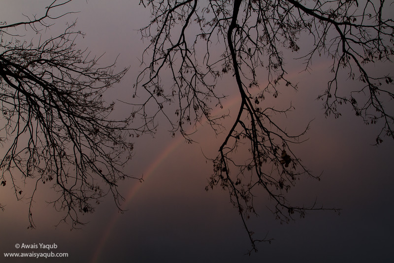 A rainbow and tree