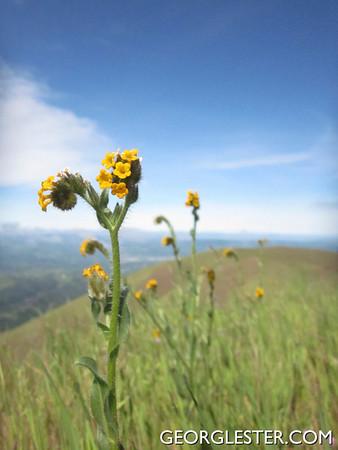 Mt Diablo Spring Wildflower Day Hike
