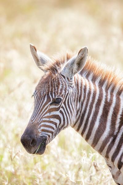 Kenya 8491d.jpg