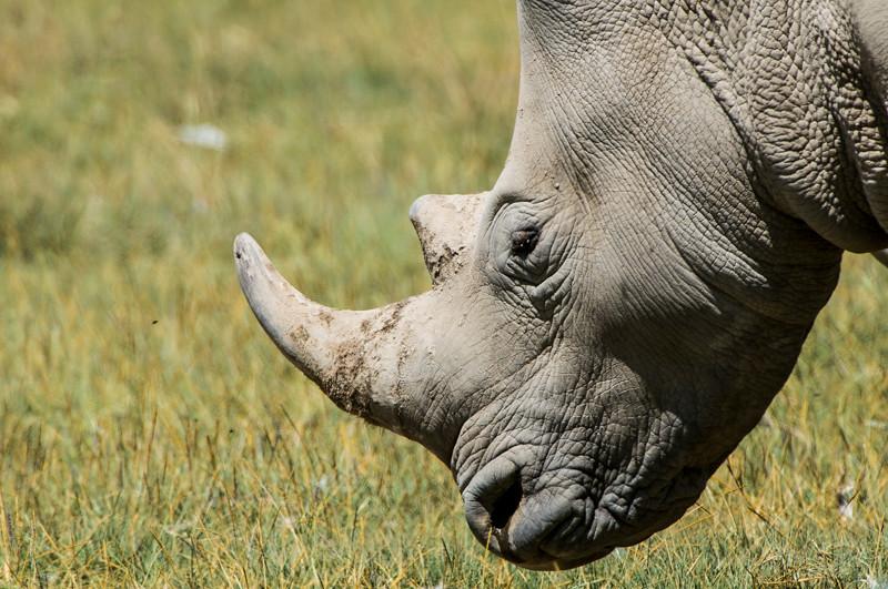 Rhinos-4.jpg