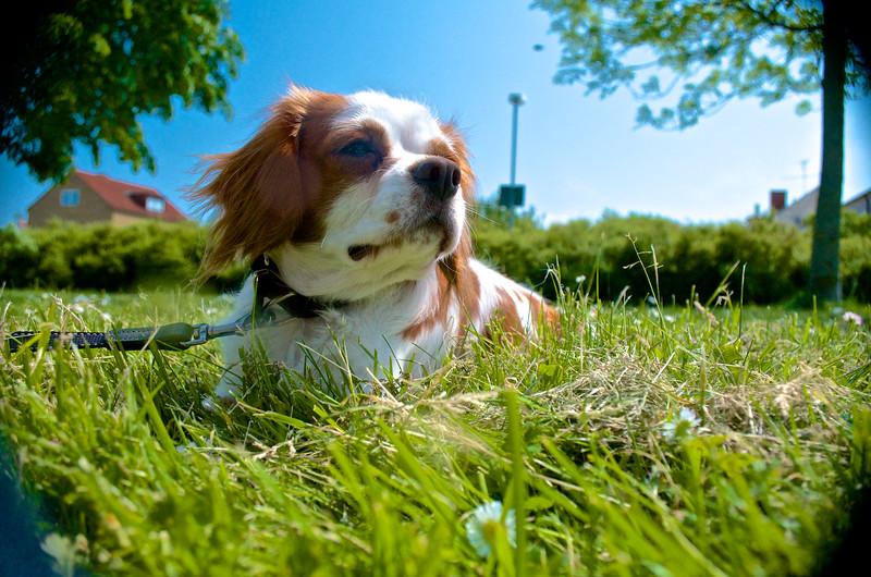 Svante In The Grass