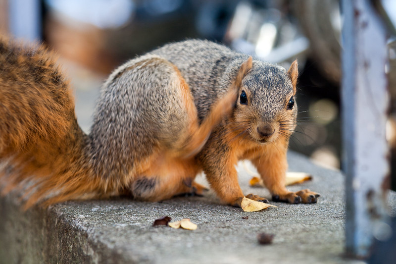 The squirrel's life: itchy