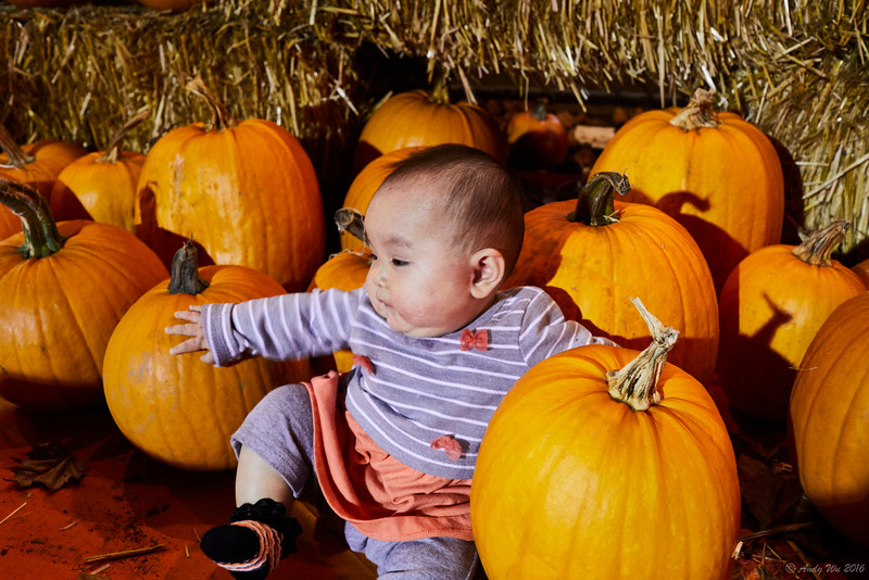 pumpkin__10.jpg