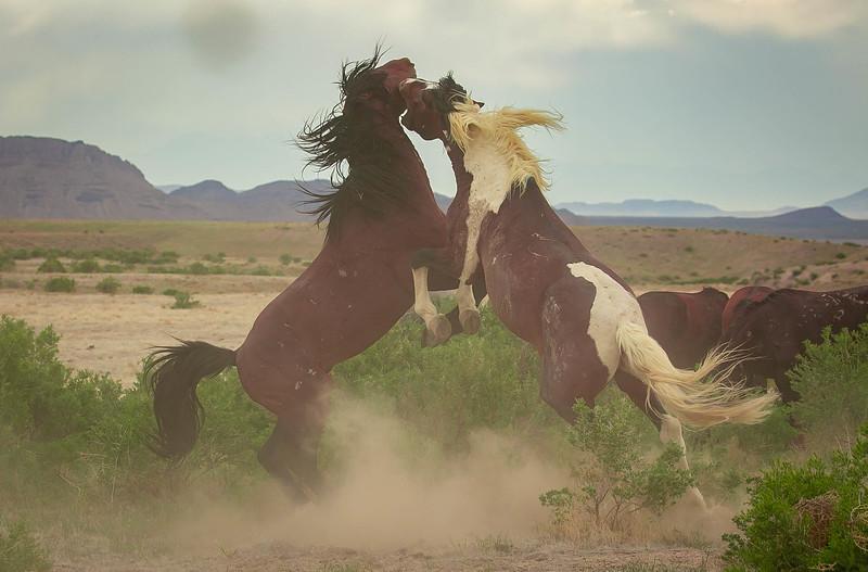 Dueling horses 2.jpg