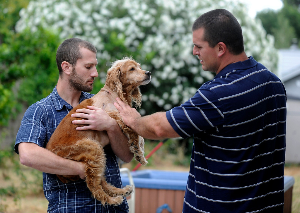 . Kirby, 13, a cocker spaniel retriever mix, recovers at home with owner  Zach Grimm, left, and his roommate Dave Biller in Concord, Calif., on Monday, June 24, 2013. Kirby was in the backyard while police were looking for a suspect. He barked at an officer that entered the yard and was shot. Grimm is angry at the police and says he would like an apology. (Susan Tripp Pollard/Bay Area News Group)