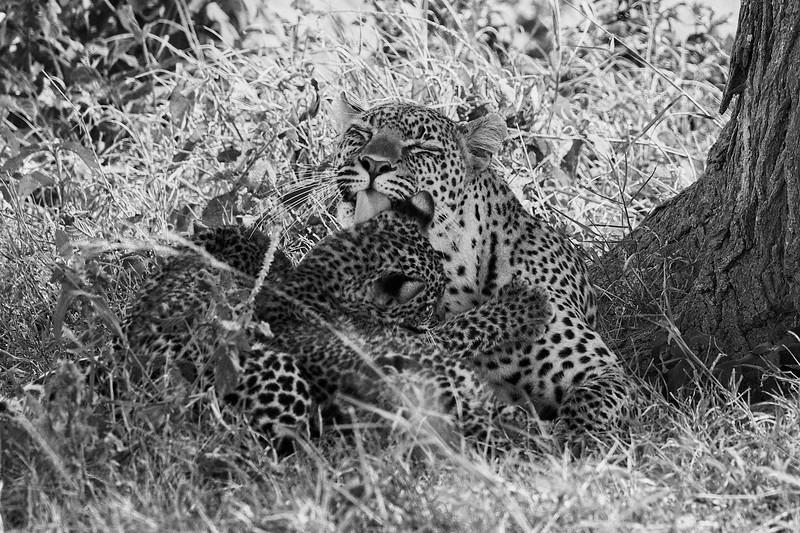 Tanzania 2013 1658.jpg