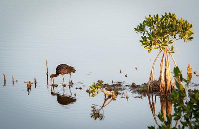 Marsh Trail Birds Feb. 21, 2021