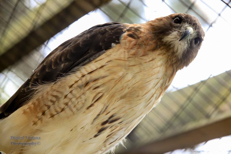 2016-07-17 Fort Wayne Zoo 997LR.jpg