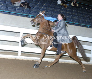 CLASS 44  AMATEUR PONY 18 & OVER SPECIALTY